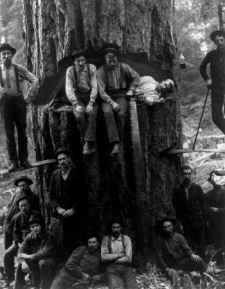 17 Foto menakjubkan Pohon Raksasa dari Masa Lalu