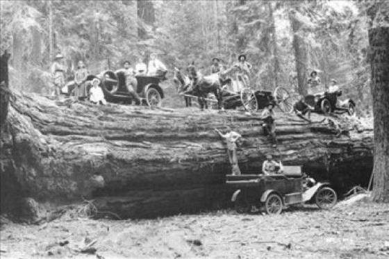 40 Foto menakjubkan Pohon Raksasa dari Masa Lalu