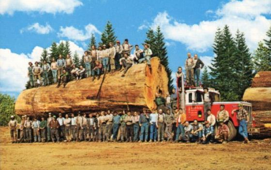 46 Foto menakjubkan Pohon Raksasa dari Masa Lalu