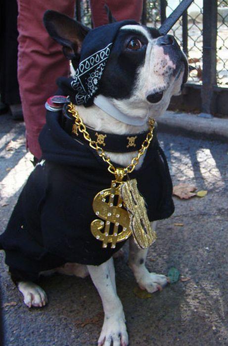 Gangsta Dogs Barnorama