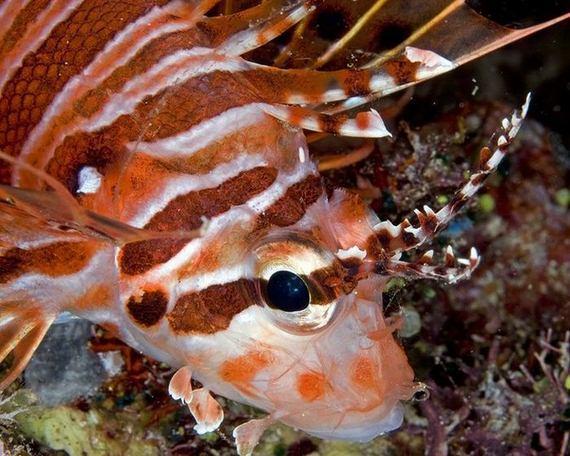 Amazing Sea Creatures Barnorama