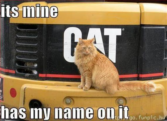 Funny Cat Pics Captions