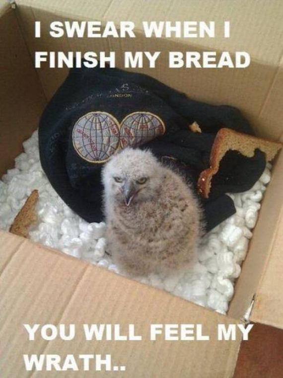 Funny animal pictures with captions for adults - photo#46
