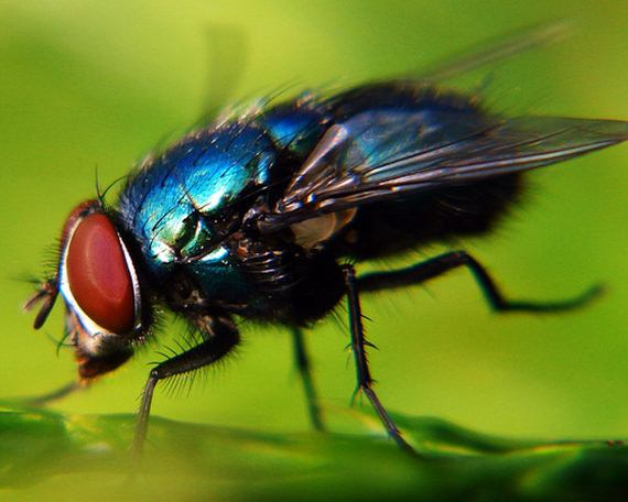 Beautiful Photos of Insects - Barnorama