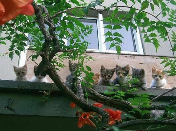 proxy - Supercute animals, part 2  - Photos Unlimited