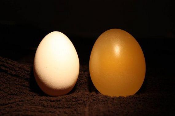 Naked Egg Experiment. Egg vs Vinegar - Barnorama