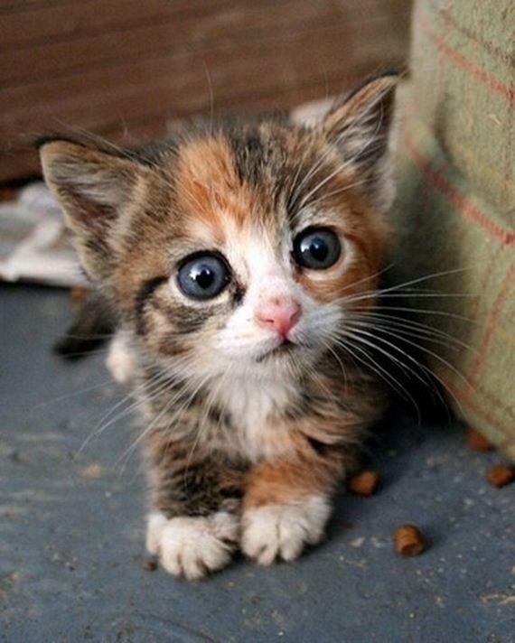 壁纸 动物 猫 猫咪 小猫 桌面 570_712 竖版 竖屏 手机