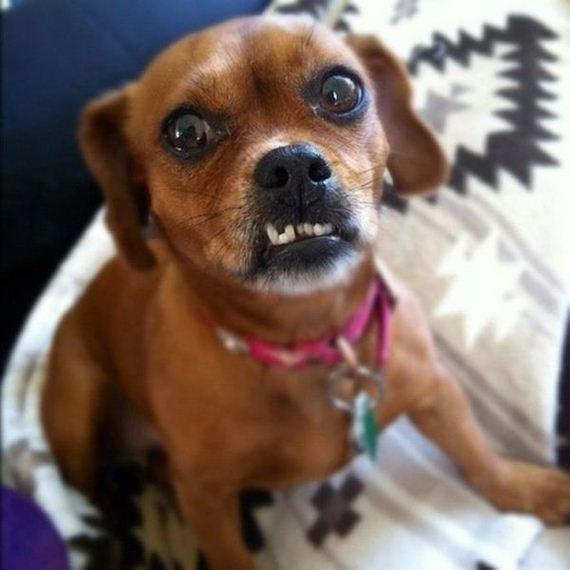 Dogs With Underbites Barnorama