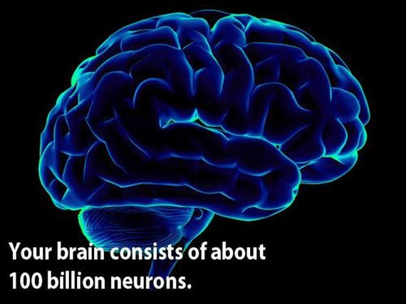 02 - The brain is a wonderful organ - Science and Research