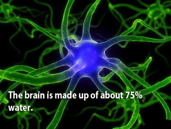 03 - The brain is a wonderful organ - Science and Research