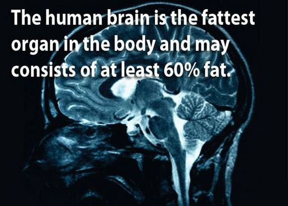 10 - The brain is a wonderful organ - Science and Research