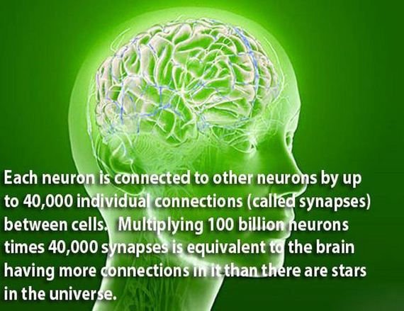12 - The brain is a wonderful organ - Science and Research