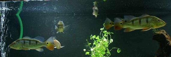 660_gallons_aquarium