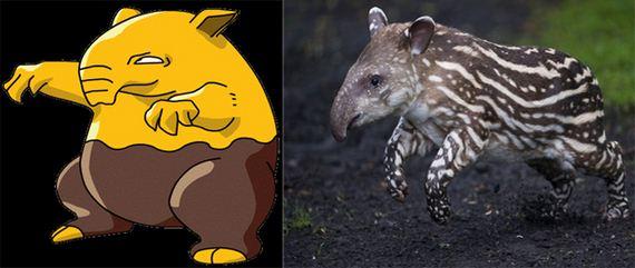 Animals-Definitely-Pokemon