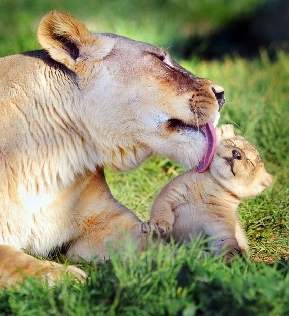 Animals-Demonstrating-Why-Mothers-Love