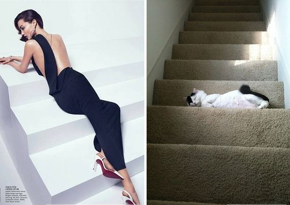 Awkward-Modeling-Poses-Acted-Cats