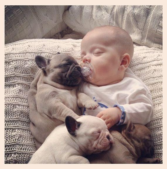 Baby-Covered-French-Bulldog