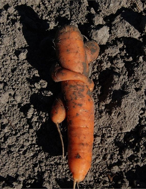 Best-Carrot-Hugs