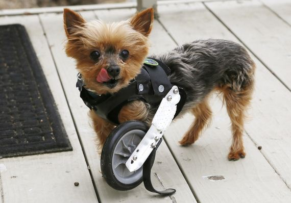 Cutest-Thing-on-one-Wheel