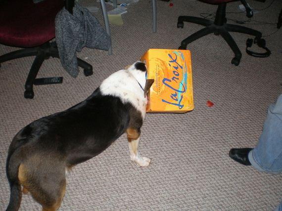 Dogs-That-Immediately-Regret