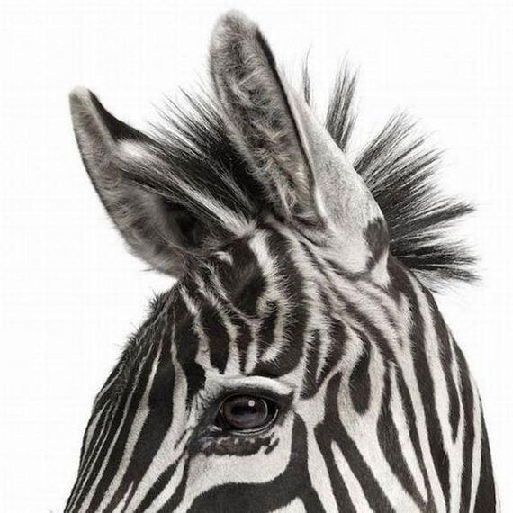 Epic-Animal-Portraits