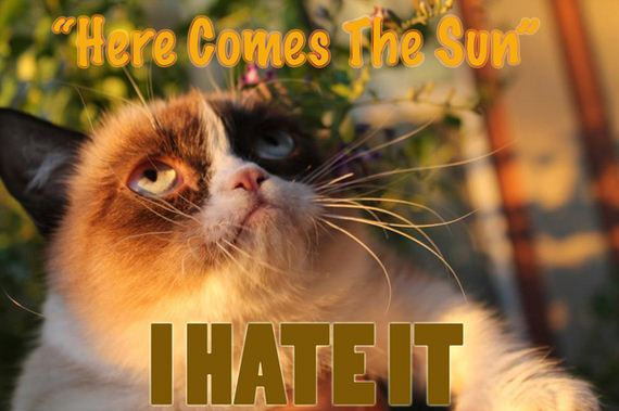 Grumpy Cat Has No Respect For The Beatles