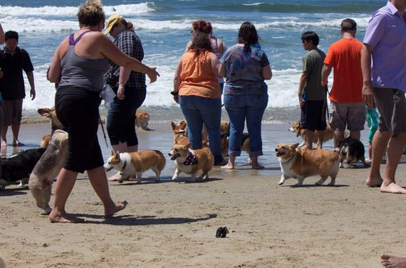 Happens-When-140-Corgis-Have-Beach-Party