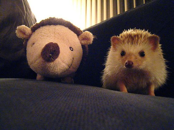 Hedgehogs-Things