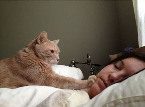 How to Wake People Up If You Are a Cat