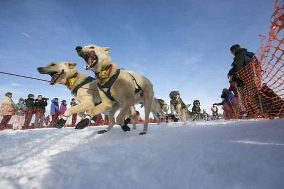 Most-Excited-Photos-Racing-Dogs