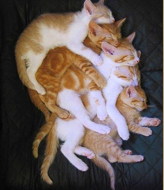 Οι περισσότεροι-Σημαντικό-Αγκαλιά-Θέσεις