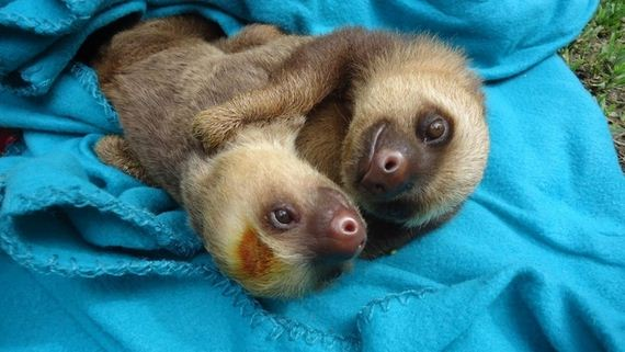 Most Important Cuddling Positions - Barnorama