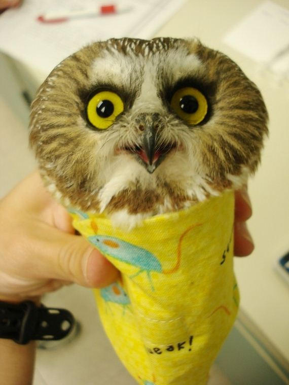 Owls-That-Cant-Get-Any-Respect