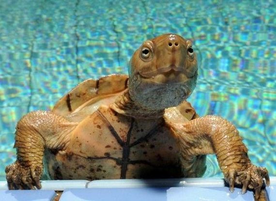 Turtles Celebrate World Turtle Day Barnorama