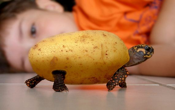 Turtles-Celebrate-World-Turtle-Day