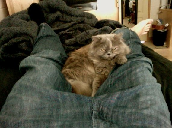 Why-Nap-Time-Should-Mandatory-Cats