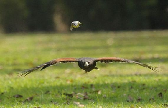 a_brave_tiny_bird