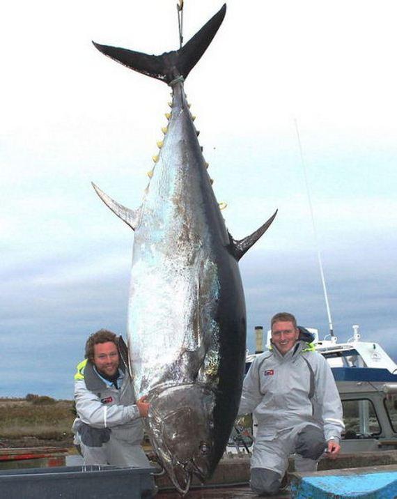 a_few_fishermens_biggest_catches_ever
