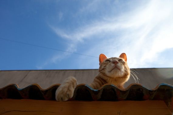 amazing-photos-from-cat-heaven