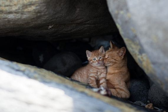 Amazing Photos From Cat Heaven Island In Japan Barnorama
