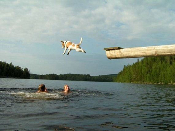 amazing_jumping_snaps_captured_in_various_moments