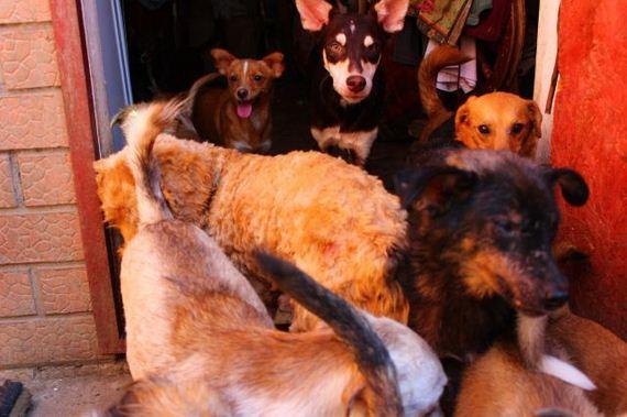 animal-shelter