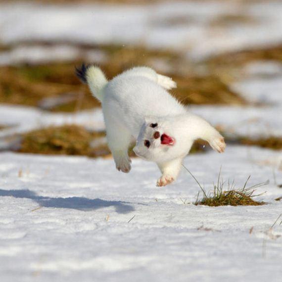 animals-defying-gravity
