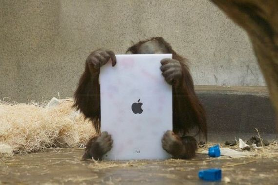 apes-are-using-iPads-now-humanity-doomed