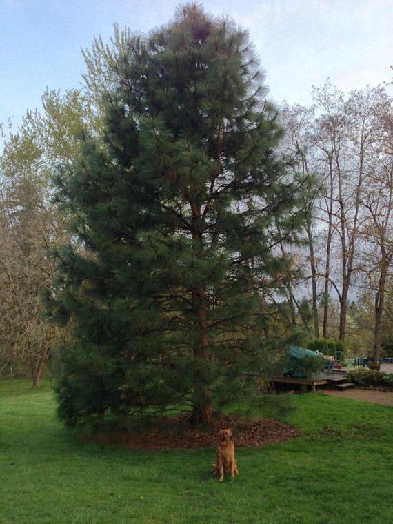arbor_day_tree