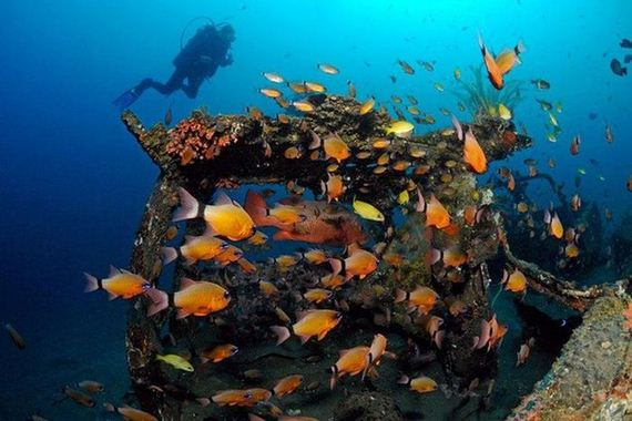 artificial-reefs