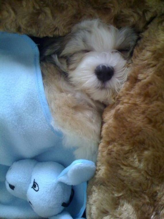 baby_pet_pictures