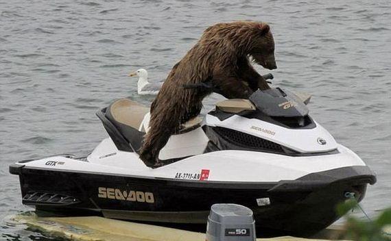 bear_jet_ski