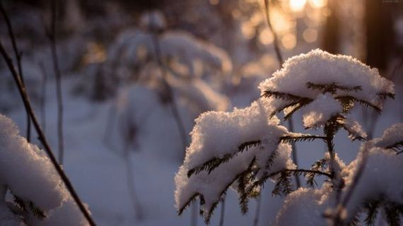 beautiful-winter-pictures