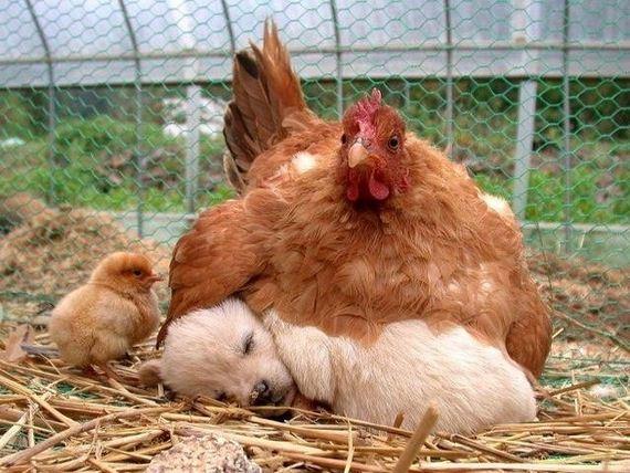 best-animal-cuddlers